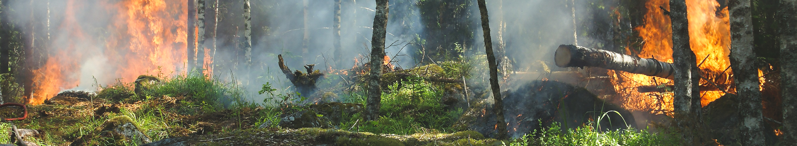 Small forest wildfire