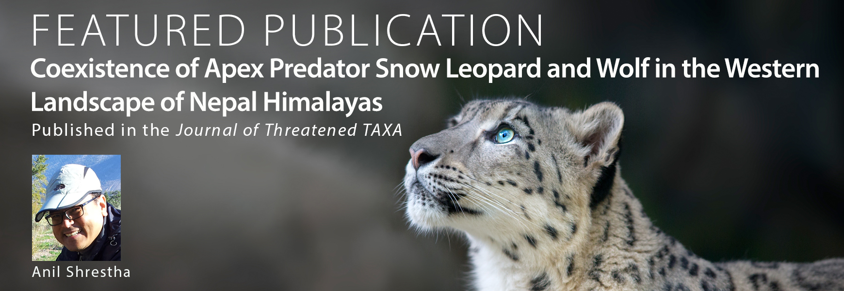 Featured Publication - Anil Shrestha Snow Leopard - Banner
